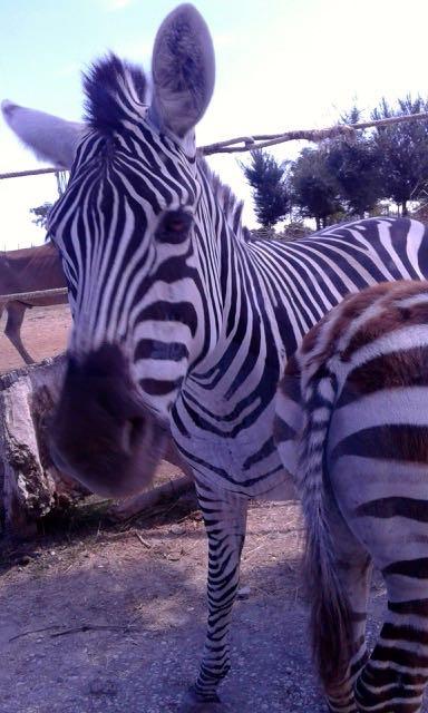 Trip-to-safaripark-09