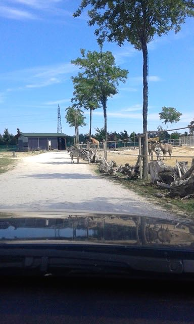 Trip-to-safaripark-10